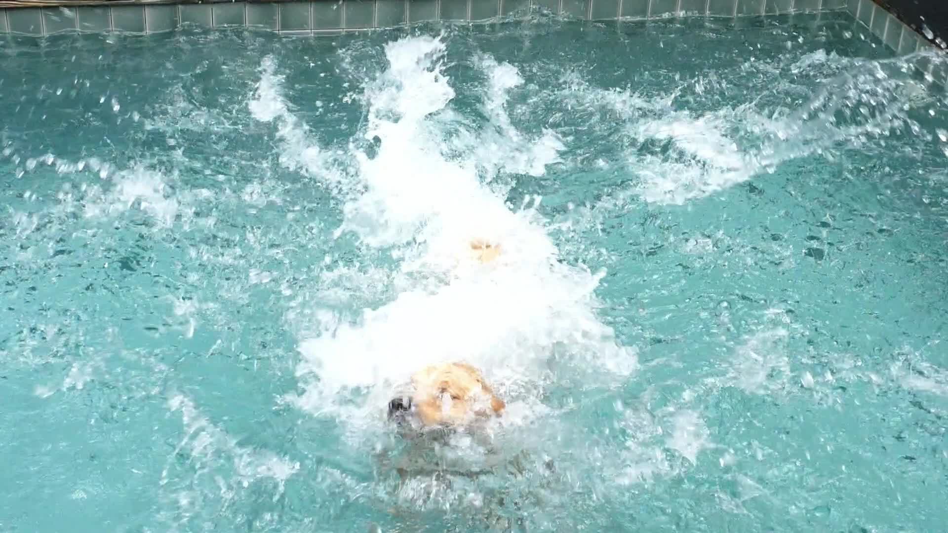 Dog jumping in the swimming pool cute